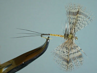 brown drake spinner_ps-top400.jpg